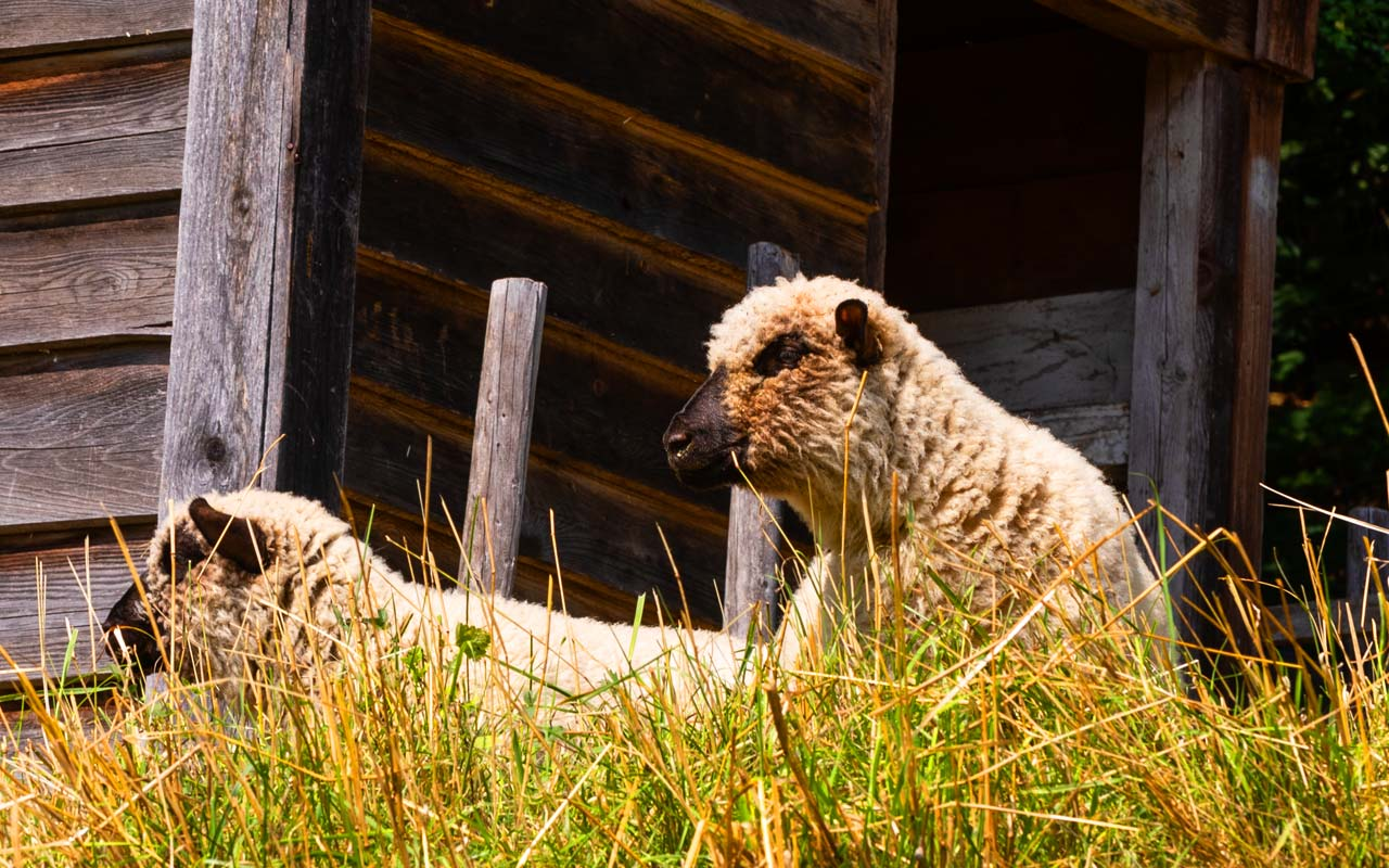 Tierwelt Gasthof Bauernhannla
